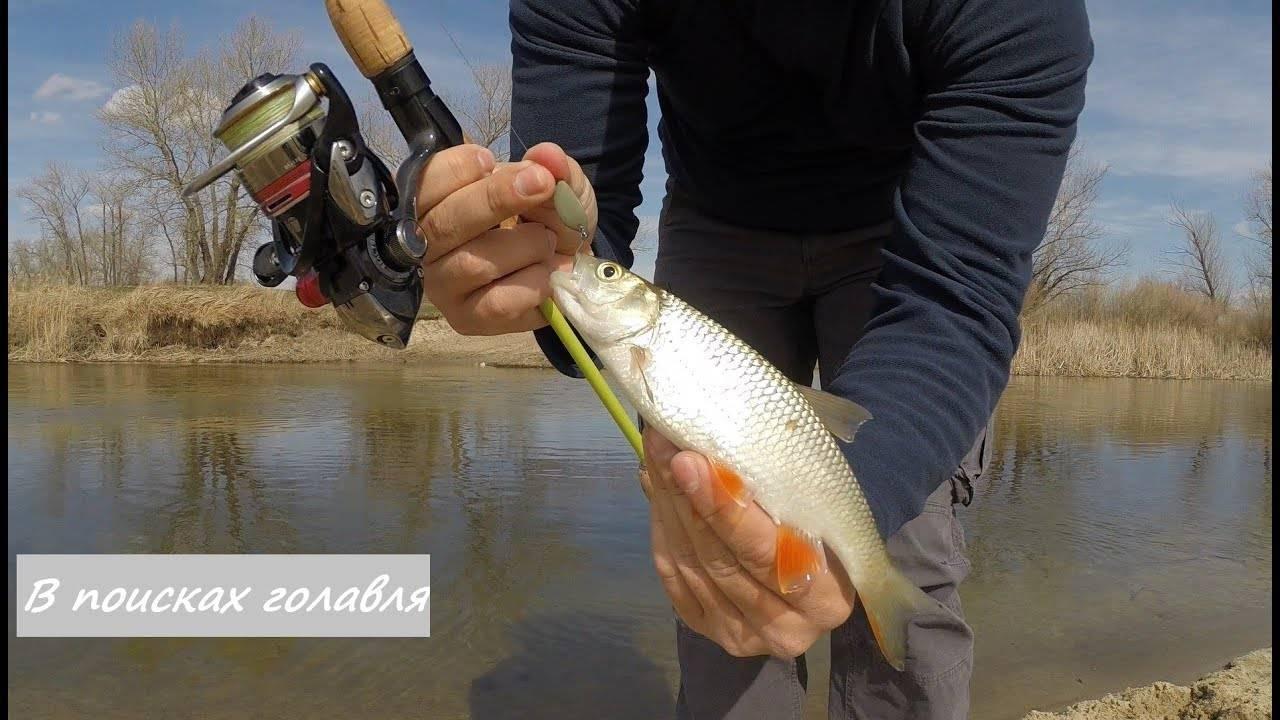 Ловля голавля на спиннинг: подготовки снасти, поиск рыбы, выбор и подача приманки