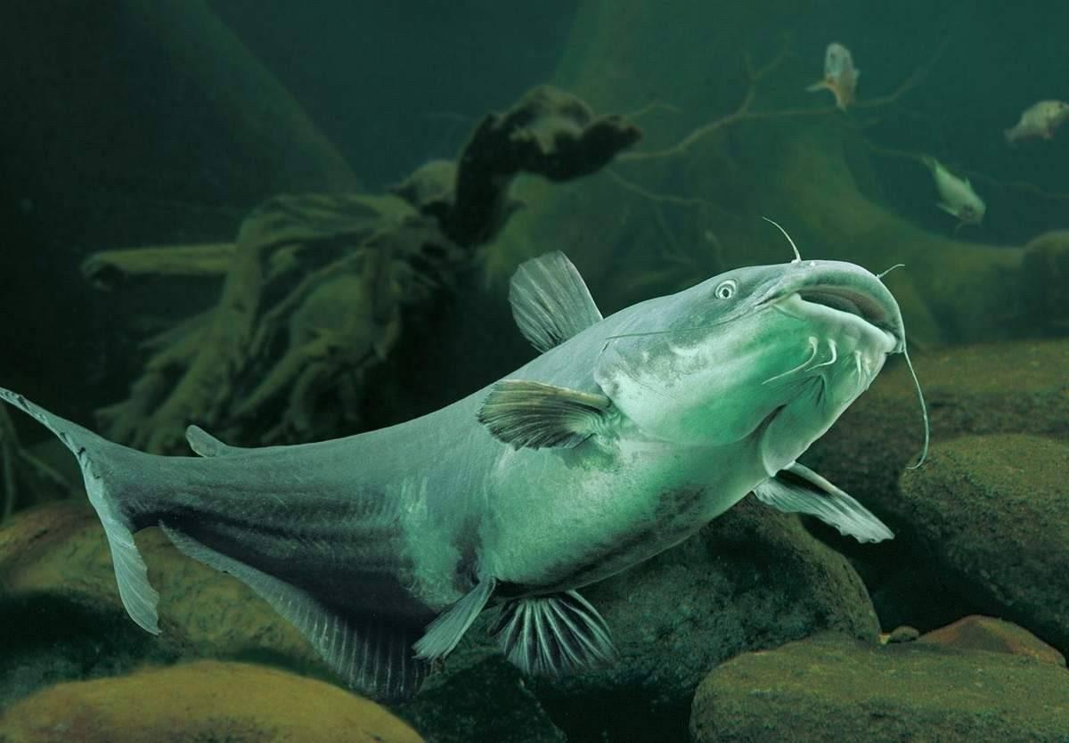 Аквариумные рыбки — фото с названием и описанием, более 200 разновидностей.