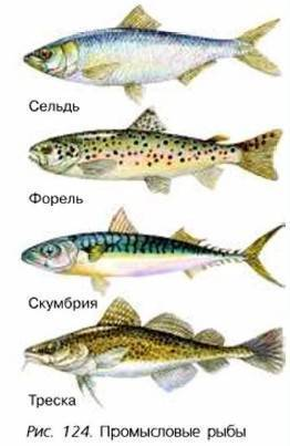 Какая рыба относится ксемейству тресковых