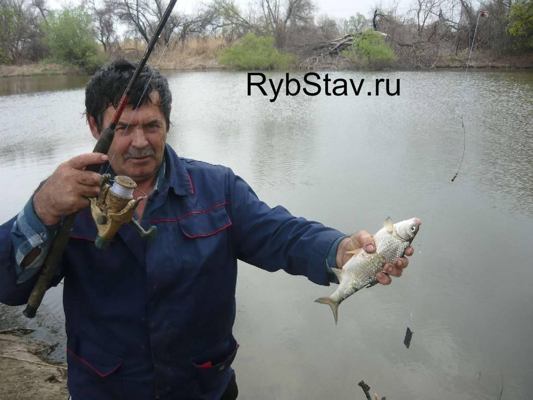 Секреты астраханской рыбалки на воблу весной