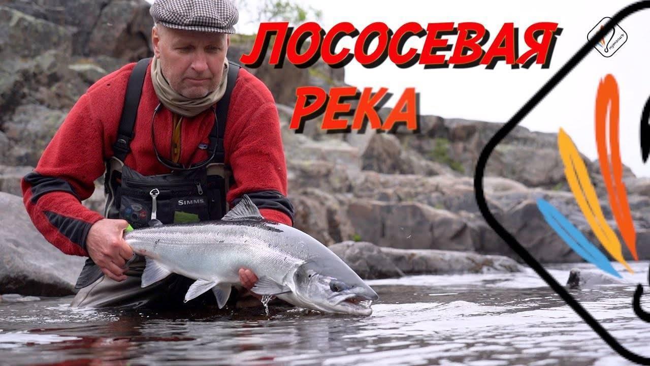 Цвет вообще и цвет вертушки в частности – статья а.неймарка о влиянии цвета приманки на клев рыбы