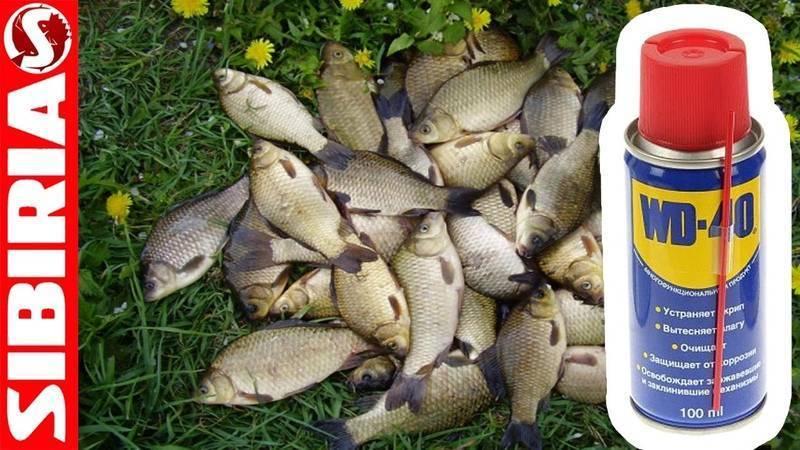 Лучшие активаторы клева для приманки хищных и мирных рыб