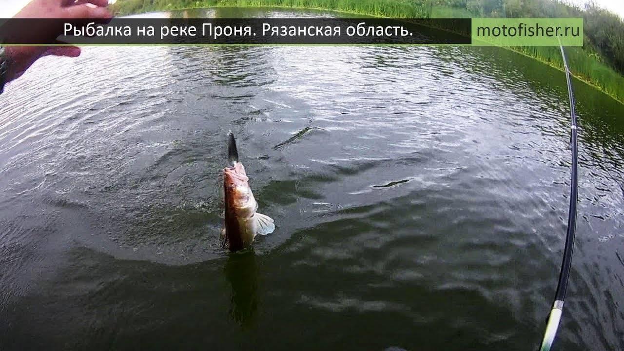 Рыбалка в рязани и рязанской области: на реке ока и озере великого, в синце и поярково, рыболовные базы и другие места
