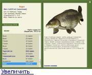 Карп: фото рыбы, где водится, чем питается и сколько растет, виды (зеркальный и речной)