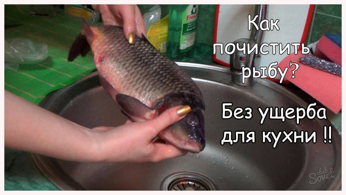 Как почистить рыбу от чешуи быстро, правильно и легко в домашних условиях?
