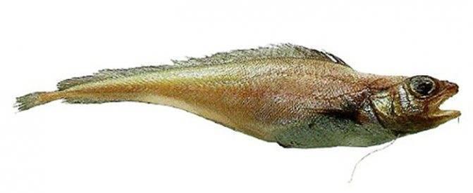 Рыба лемонема содержание полезных веществ, польза и вред, свойства
