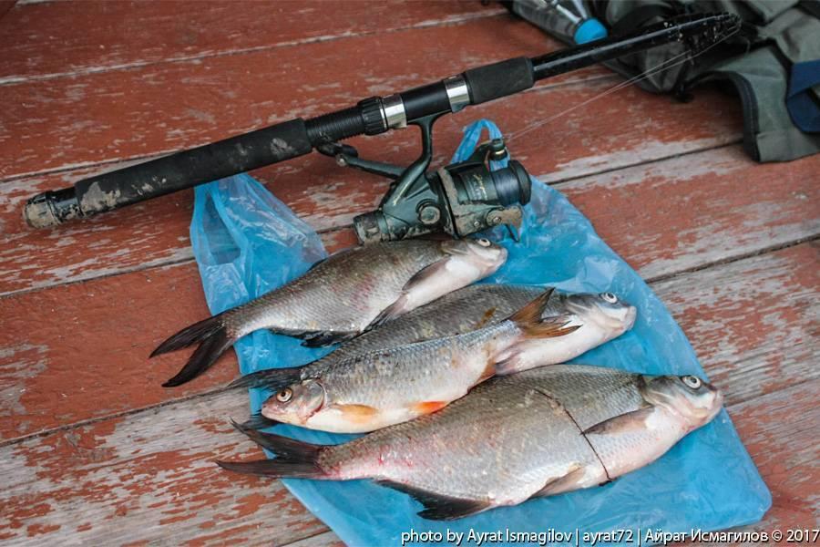 Рыбалка на реке ишим в разное время года
