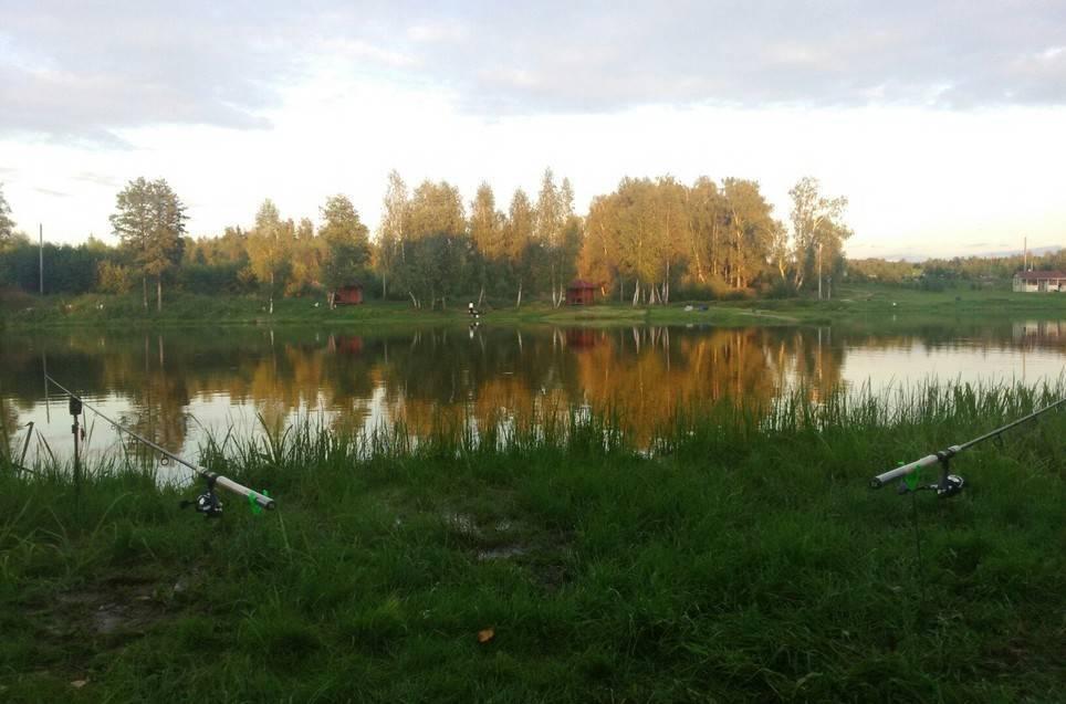 Платная рыбалка в чеховском районе московской области – суперулов – интернет-портал о рыбалке