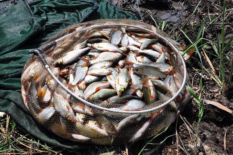 Можно ли продавать рыбу, выловленную самостоятельно?