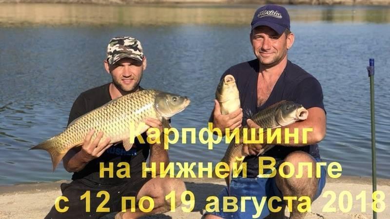 Ловля сазана в конце лета – рыбалке.нет