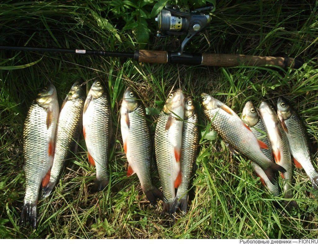 Река нара московской области: особенности рыбалки, какая рыба водится