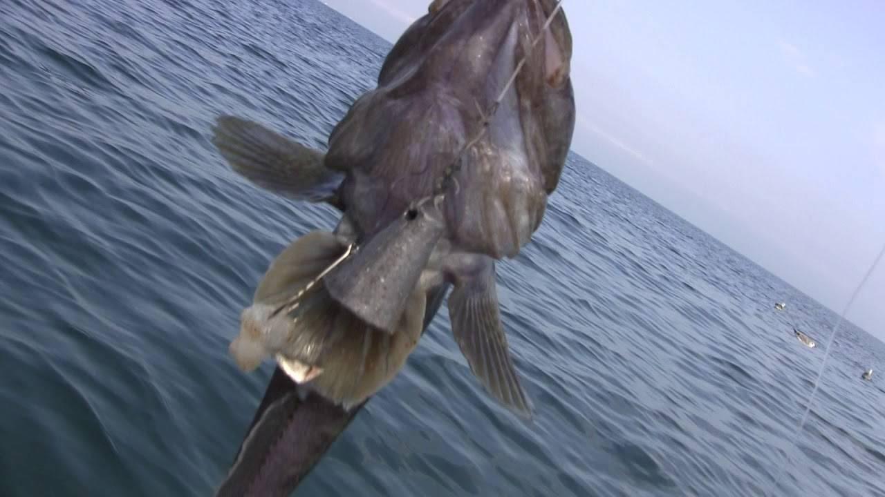 Снасть для ловли бычка в азовском море