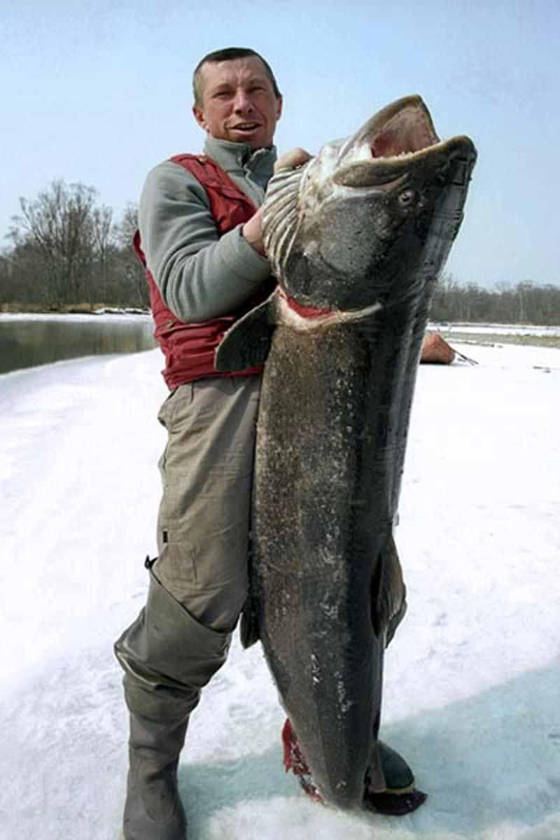 Рыбалка на тайменя – снасти и приманки