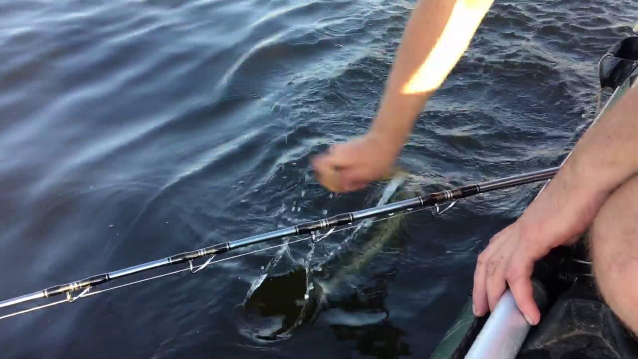 Ловля сома на квок: что это такое? фото, видео рыбалки с лодки, выбираем эхолот, приманку и электронный квок