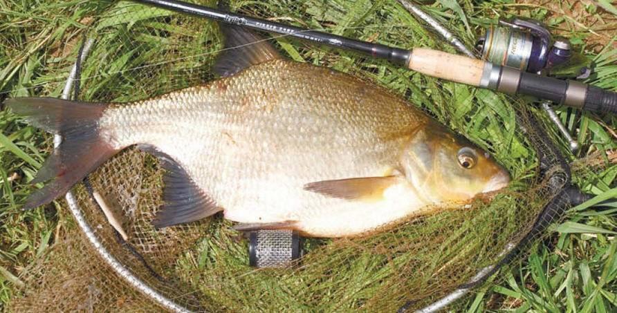 Ловля леща в октябре на фидер на реке: как и на что ловить