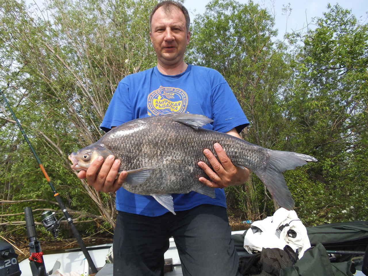 Белый амур: описание рыбы и способы ее лова