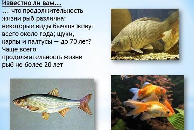 Статистика:продолжительность жизни в россии — русский эксперт