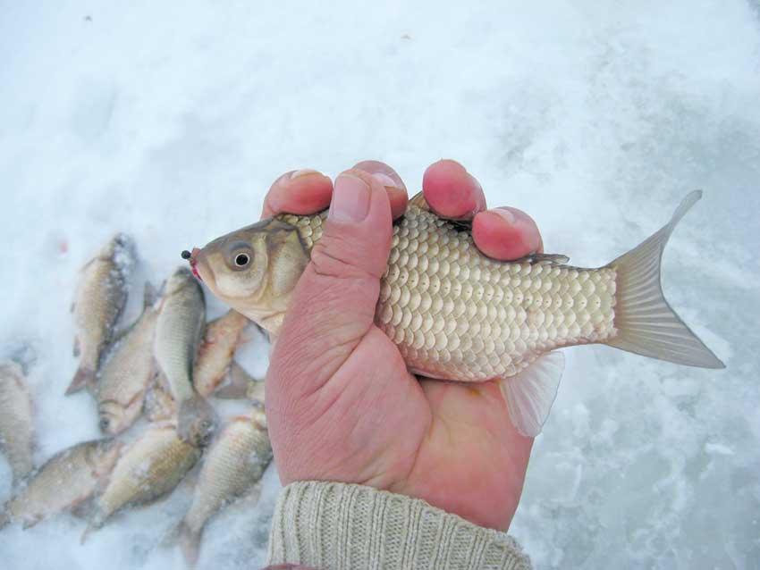 Особенности ловли карася зимой – тактика, техника и снасти