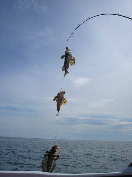Морская рыбалка | рыбалка сочи