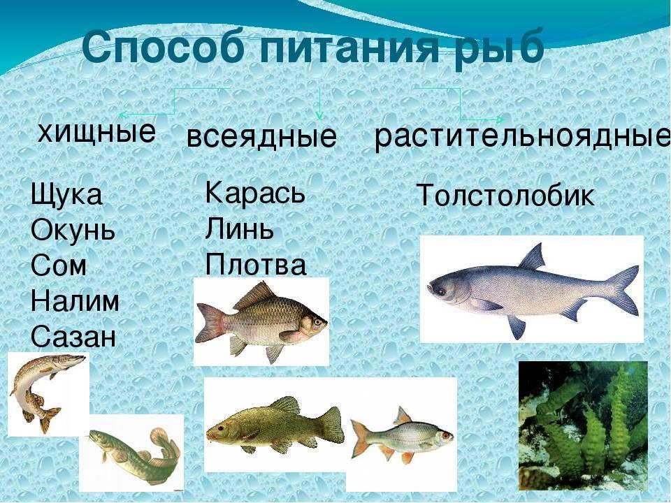Морские и пресноводные рыбы