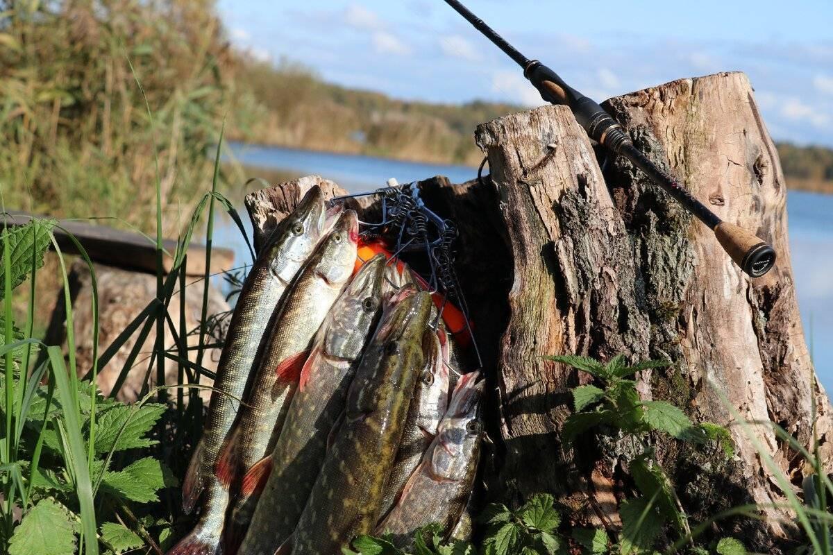 Рыбалка в ставропольском крае - куда поехать, обзор водоемов, карта, отчеты о рыбалке