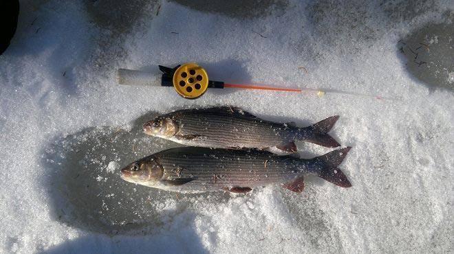 Кемеровская рыбалка