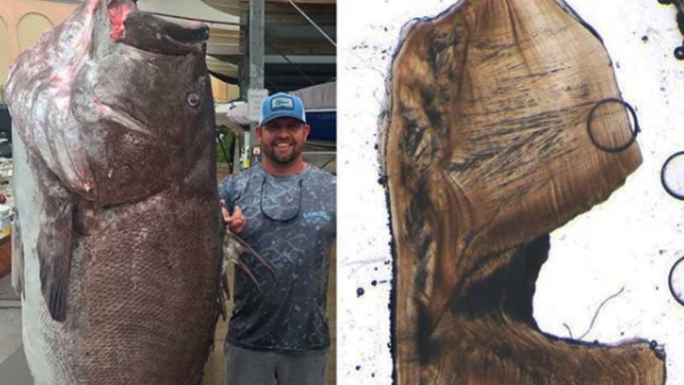 Самый большой лещ, пойманный в россии и в мире, размеры наиболее крупной рыбы