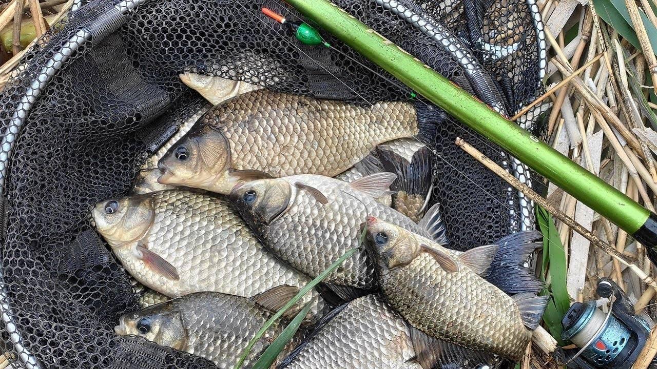 Что нужно точно знать при ловле карася, чтобы улов был отменным: все секреты этой рыбы