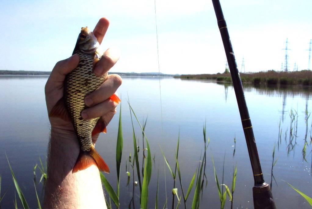 Красноперка - ловим на озере, нюансы, снасти и оснастки, наживки