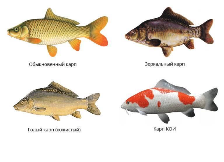 Болезни аквариумных рыбок: внешние признаки, лечение и фото