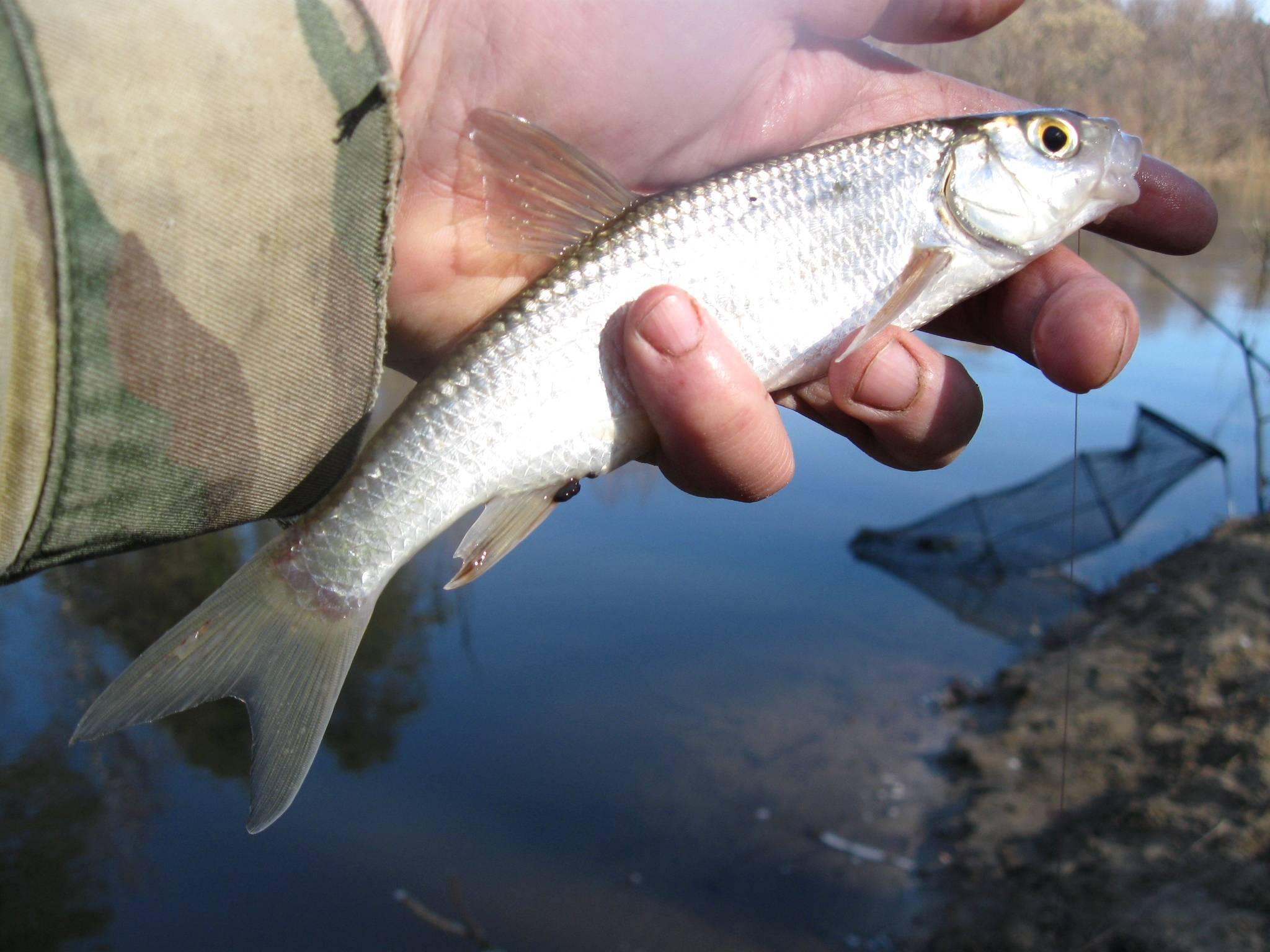 Рыбалка в мордовии: топ рейтинг уловистых мест