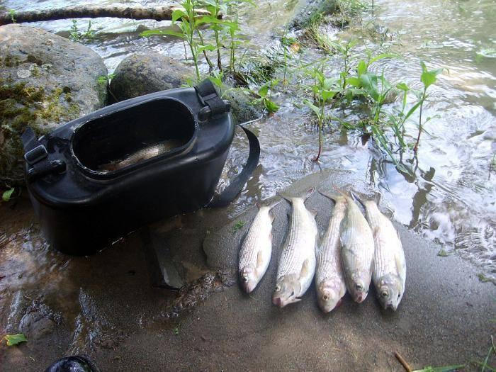 Рыбалка на катуни в августе, какая рыба водится в реке