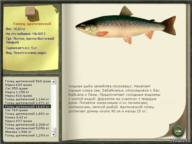 Голец: что за рыба и чем полезна?