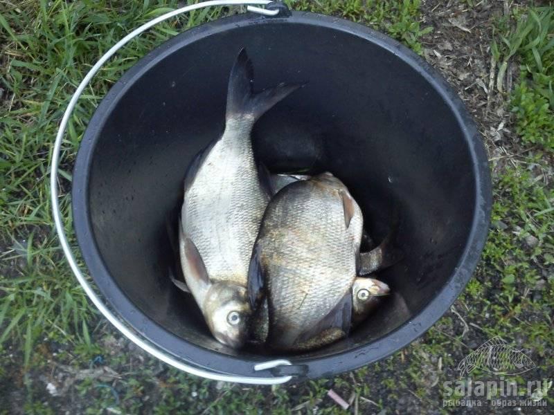 Рыбалка на канале имени москвы: список рыболовных туров