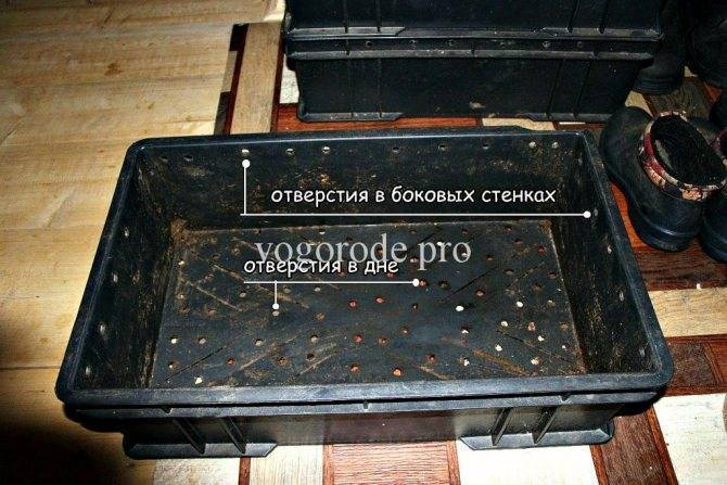 Все о выращивании и разведении дождевых червей в домашних условиях