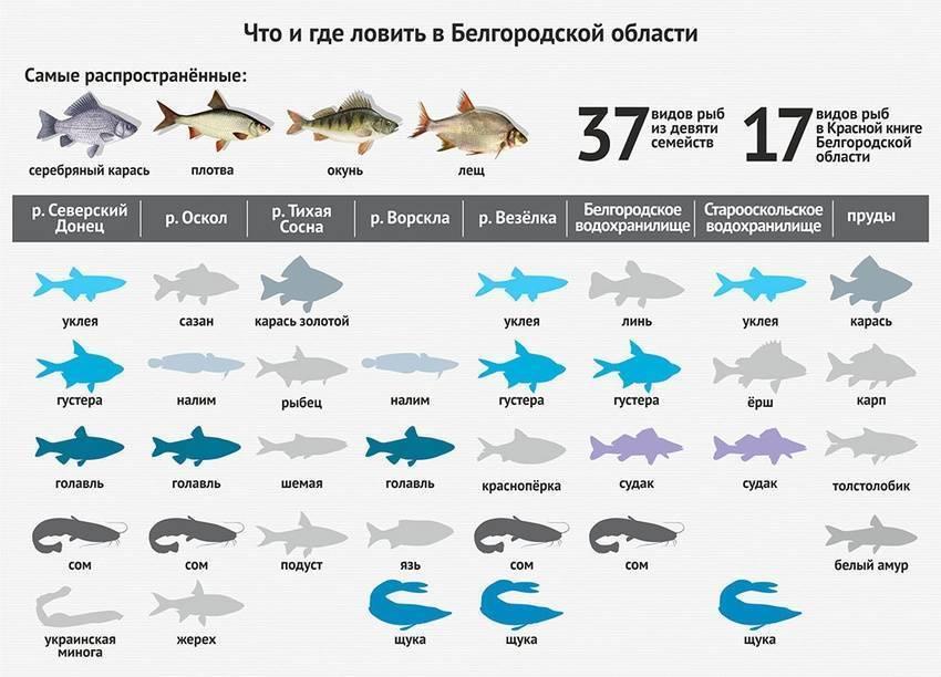 Самые вкусные рыбы российских вод