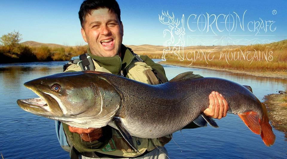 Рыба таймень – что это за продукт, рецепт запеченной, копченой, вяленой и жареной рыбы