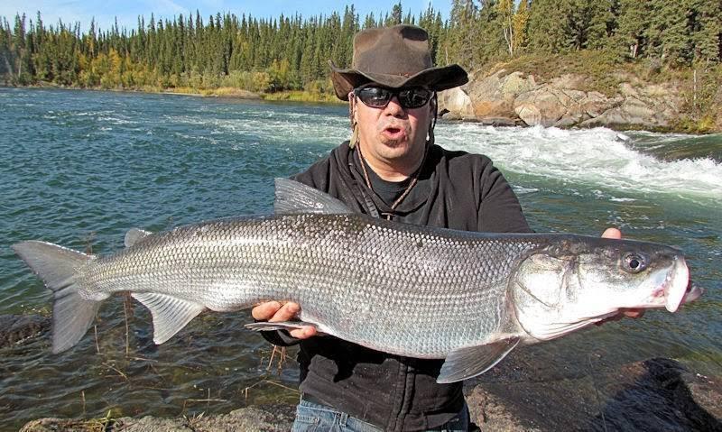 Рыба нельма - описание, польза и вред