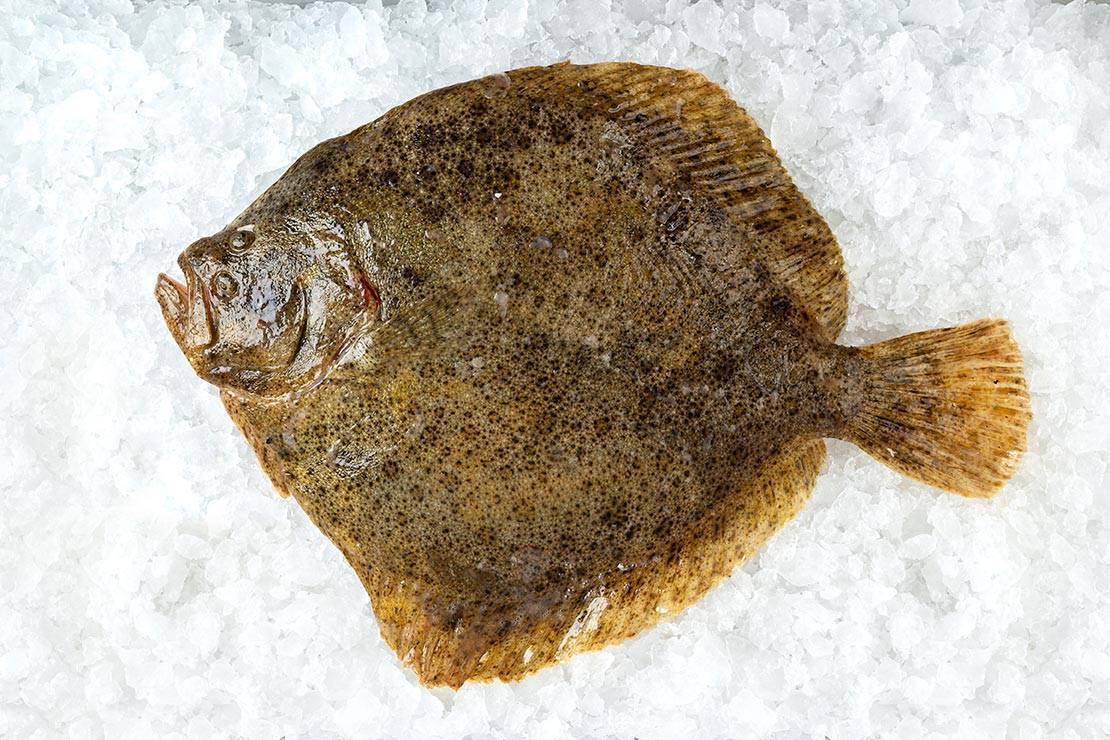 Рыба палтус и его икра — польза и возможный вред | польза и вред