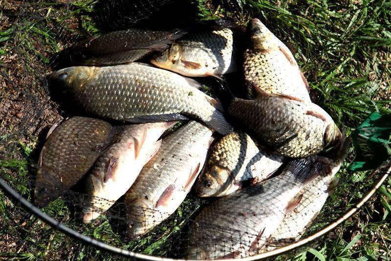 Каша для рыбалки на пружину — топ-8 лучших рецептов