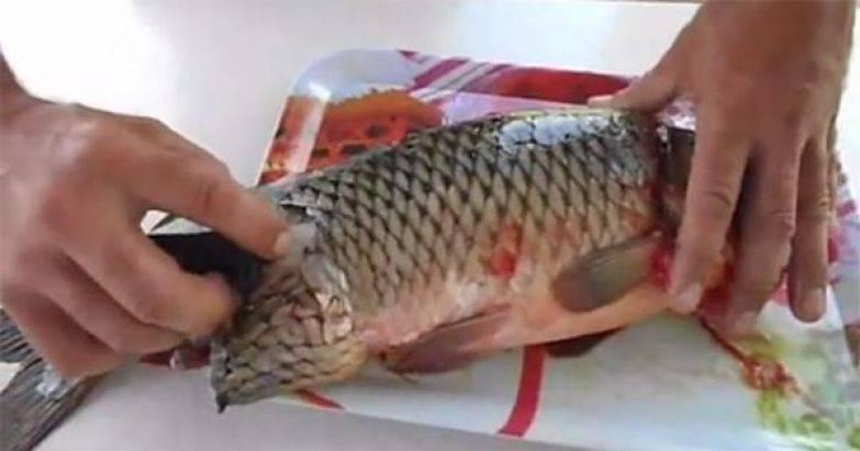 Как быстро чистить рыбу от чешуи в домашних условиях: 5 легких способов | lisa.ru