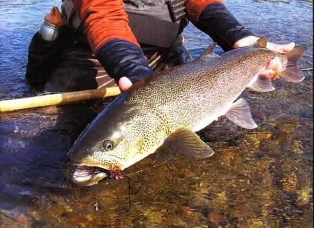 Рыбалка на реке катунь: места и особенности