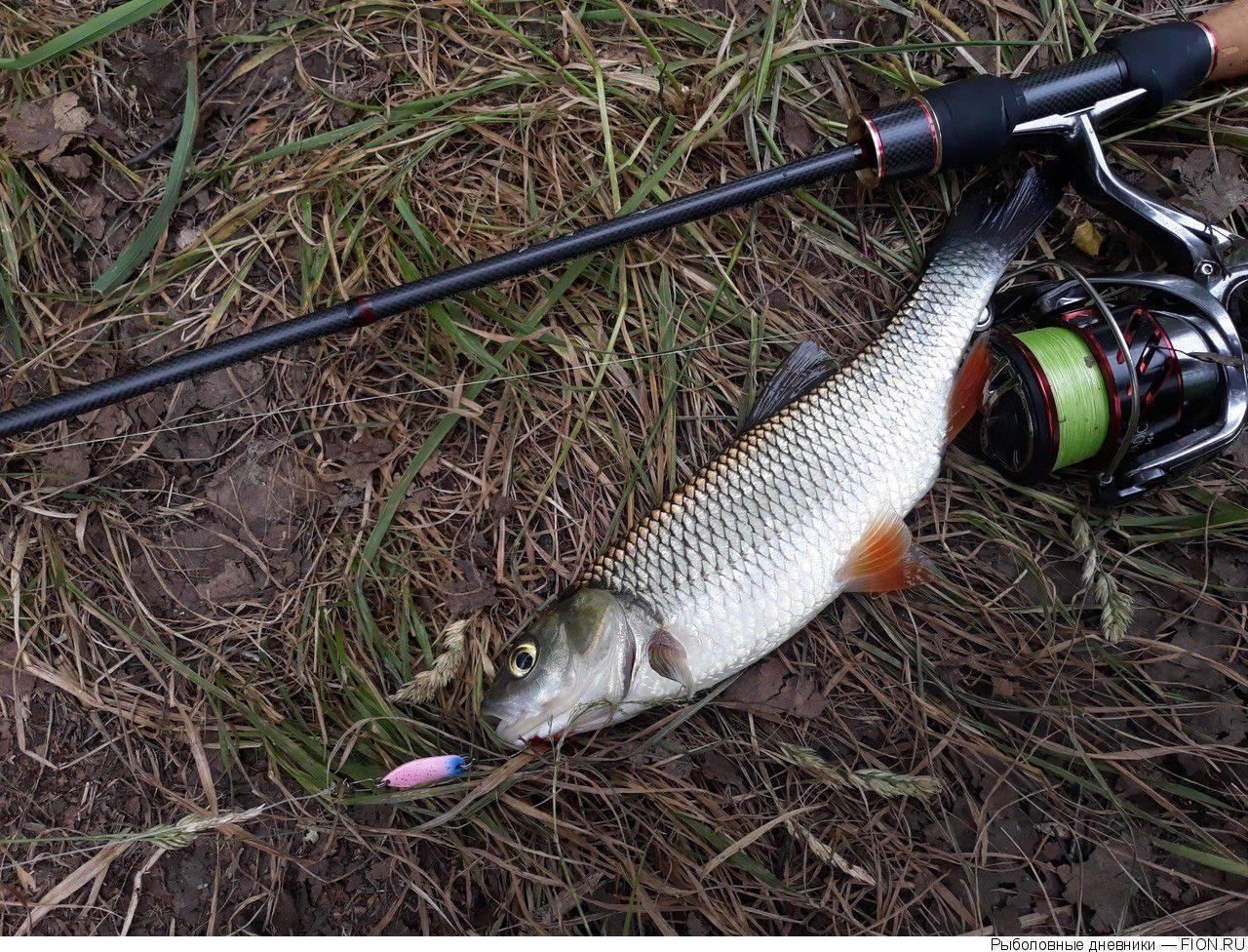 На что ловить голавля (ловля на поплавок и на донку), где обитает голавль