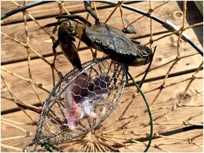 Как ловить крабов — самые эффективные способы ловли