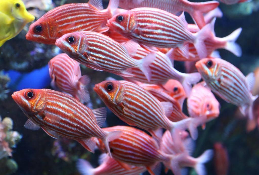 Какая рыба богата белком?