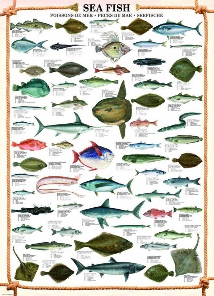 Описание и разновидности океанических рыб