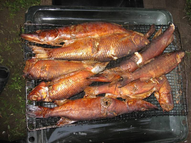 Как закоптить рыбу в коптильне горячего копчения