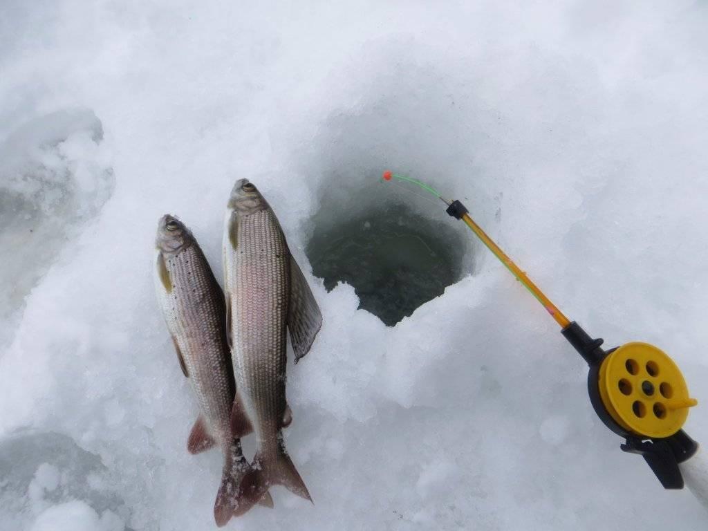 Рыбалка в феврале (2 видео) | места скопления рыбы