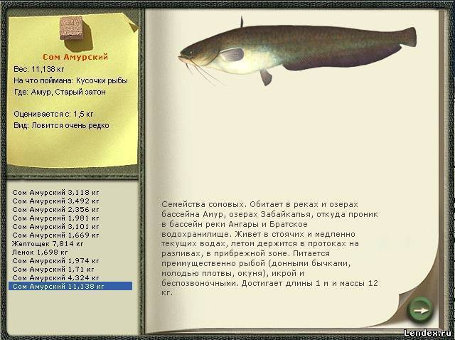 Рыба корюшка