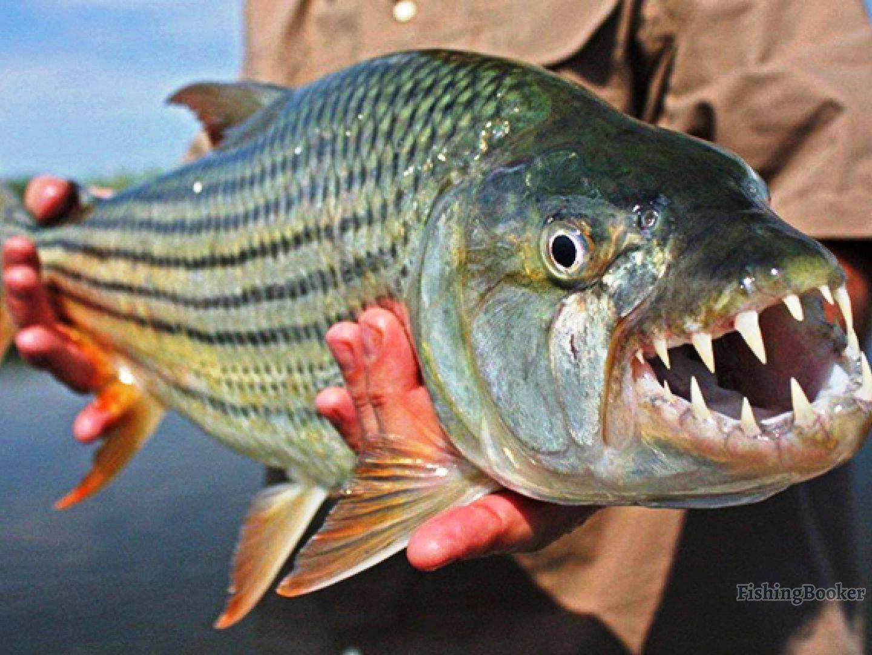 10 самых необычные рыб в мире (фото, видео)